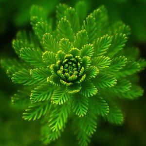 Perfumes verdes